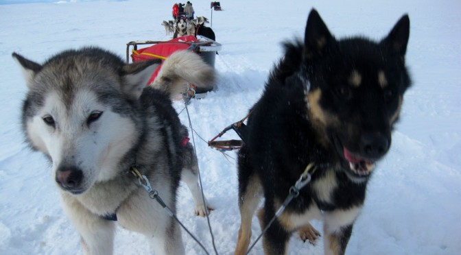 Hundeschlitten Fahren im Fulufjället Nationalpark